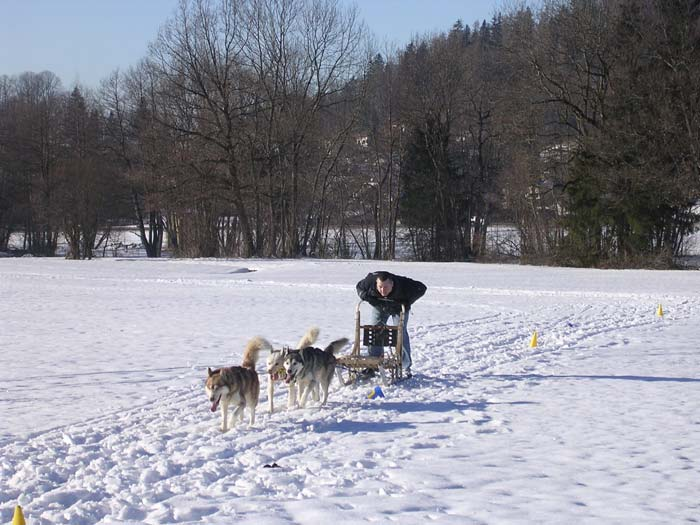 Hundeschlitteen-3.jpg