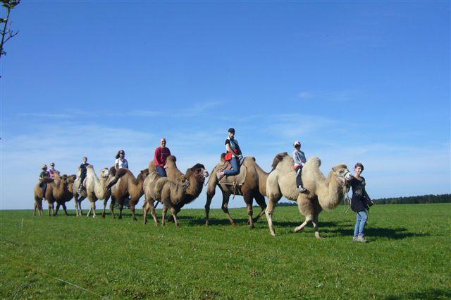kamele02.jpg
