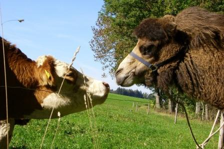 kamele05.jpg